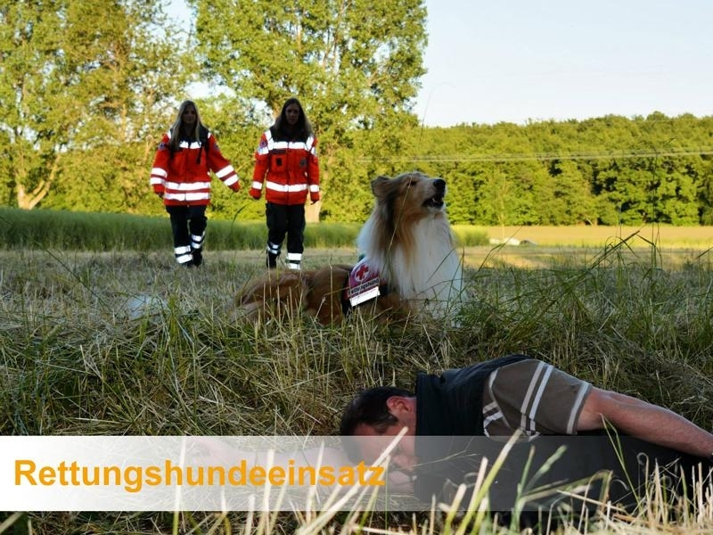 Rettungshundeeinsatz